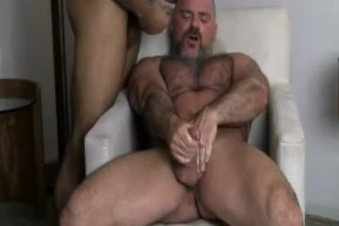 homo Bears wazoo Licking & boning